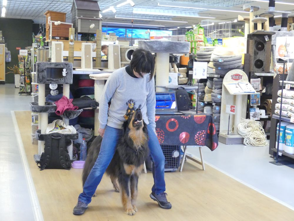 Demonstration Dog dancing chez Tom & Co